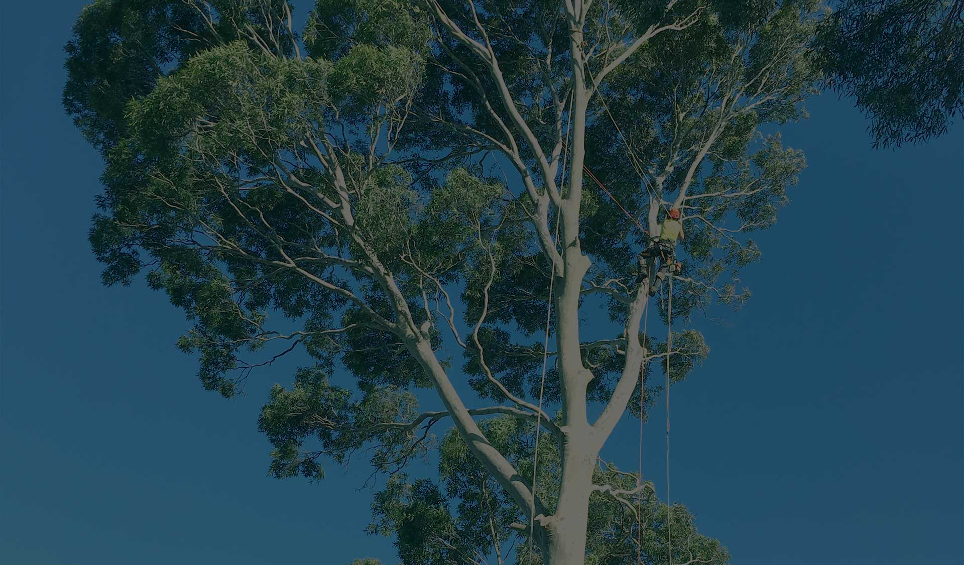 Max Tree Removal Melbourne